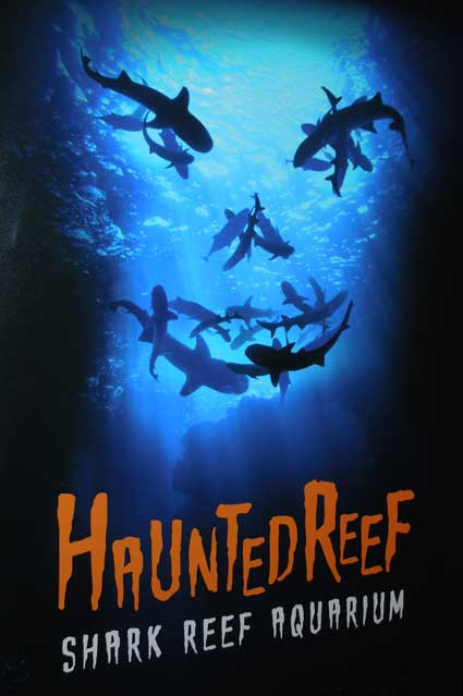 Shark Reef Aquarium - Haunted Reef