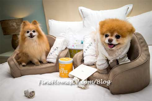 Boo and Buddy Relax At Trump Las Vegas